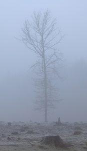 sized_mist1